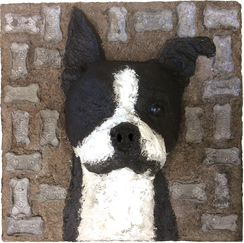 Portrait of one eyed Boston bull terrier